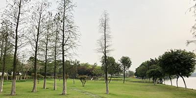 碧然美園林綠化工程意義有哪些