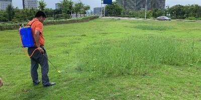 頑強的雜草如何消滅?