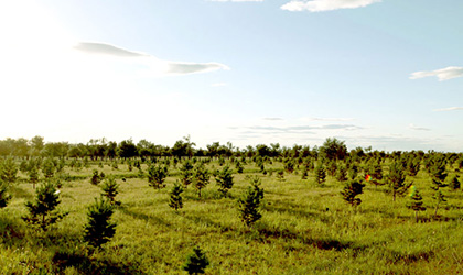 林業規劃調查